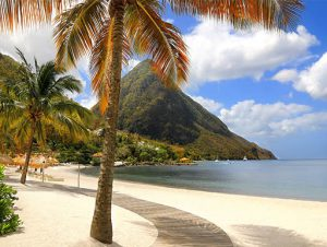 Palm tree on a beach resort in St. Lucia