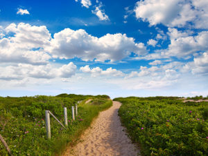 A sandy path to the beach with a small fence and greenery on both sides of the path in Cape Cod, Massachusetts