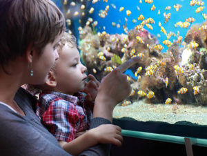 Mother and child looking at a tank full of Clown fish in aquarium