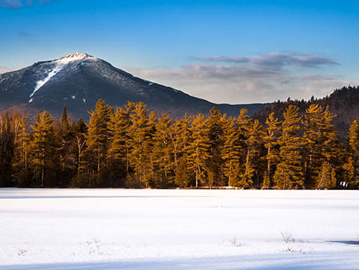 Trees at frozen Paradox Bay with Whiteface Mountain, Lake Placid, New York State nearby.