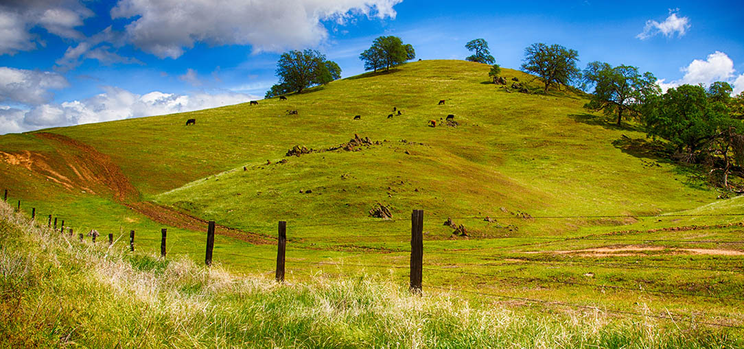 Rolling green hills with trees in the California countryside, with a fence and a bright blue sky with fluffy clouds in the background