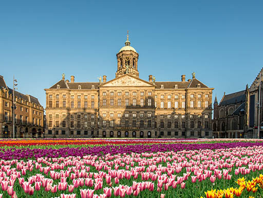 A meadow of tulips in Dam Square