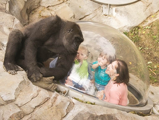 A mother and daughter look up through viewing bubble at a gorilla in the Henry Doorly Zoo in Omaha, Nebraska