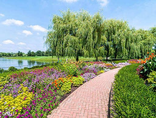 Bright flowers line each side of a sidewalk, with trees and water in the background at Chicago Botanic Garden in Chicago, Illinois on a bright spring morning.""