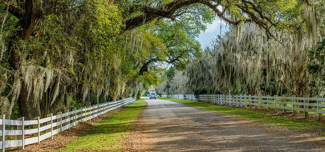 A car drives in the distance on an old stretch of Louisiana road lined by large trees and a white picket fence on a sunny day near the Bayou Teche Scenic Byway.