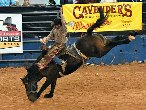 A man is bucked by a black and brown horse during a rodeo at the State Fair of Louisiana in Louisiana on a busy morning.