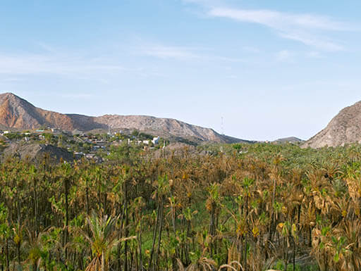 A forest of leafy green trees are pictured in front of low rolling mountains, against a light blue sky in a panoramic image of Mulegé in Baja California on a pretty afternoon.