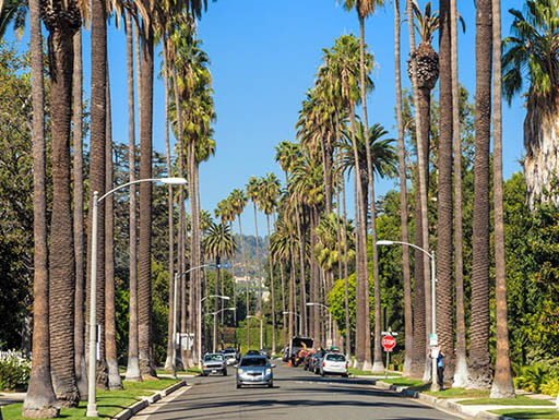 A street in Beverly Hills, California with an oncoming car and palm trees lining the road
