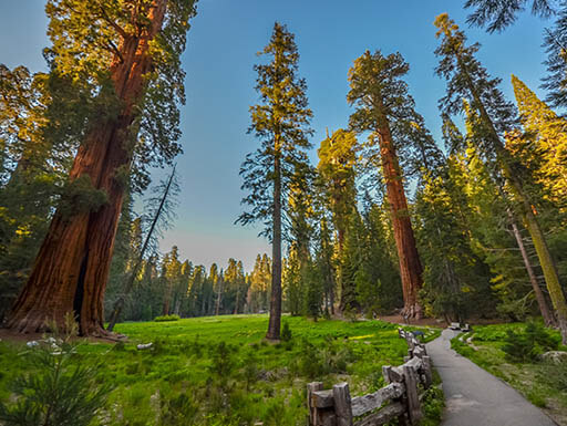 Trail for horseback riding among large redwood trees in King's Canyon near sequoia national