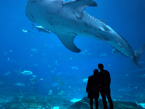 Silhouette of a couple standing in front of an aquarium tank at the Georgia Aquarium in Atlanta with a shark in the background.