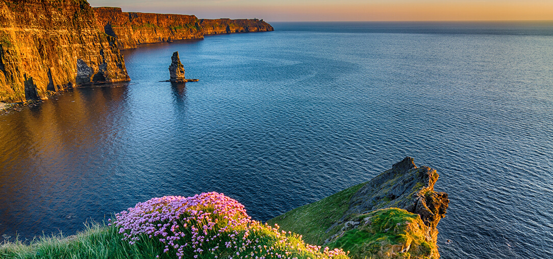 The incredible Cliffs of Moher along the Wild Atlantic Way in Ireland with purple wildflowers growing along the edge as the sun begins to set on a warm evening near Dublin.